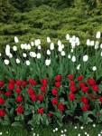 2 maja - Święto Symboli Narodowych